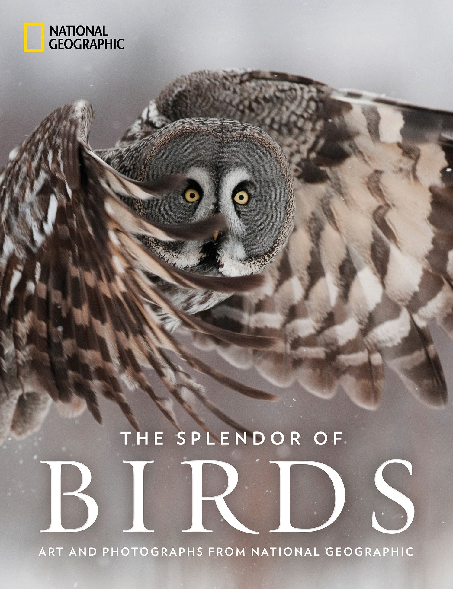 Image OfThe Splendor Of Birds: Art And Photographs From National Geographic