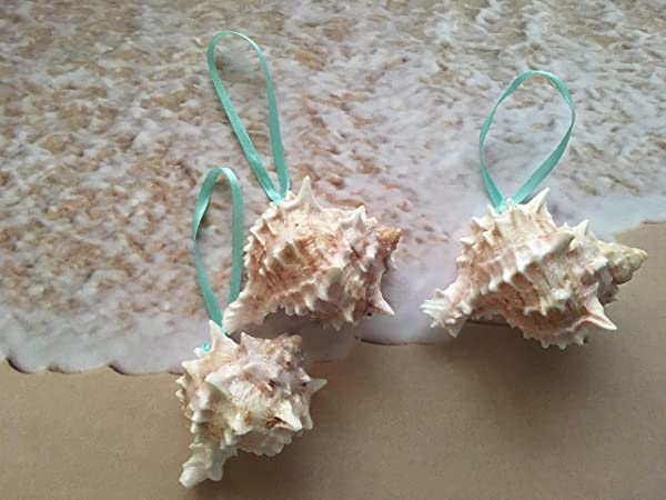 Glittered Pink Murex Seashell Ornaments With Turquoise Ribbon 3