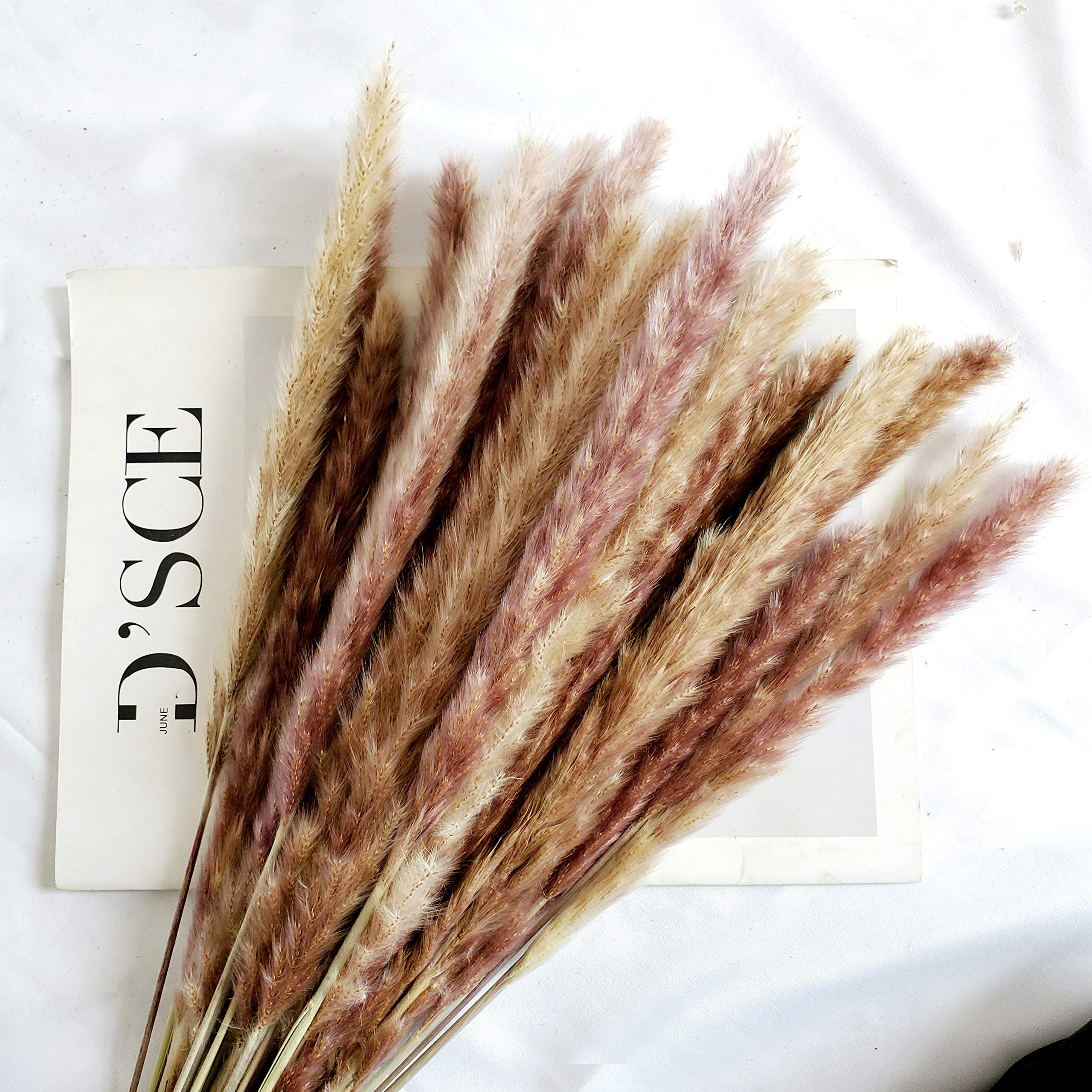 Beau Jour 45cm Natural Dried Pampas Grass 30pcs For Flower Arrangements Home Decor Artificial Dried Flora Amazon Com Au
