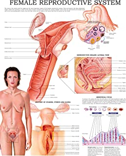 Female reproductive system e-chart: Quick reference guide