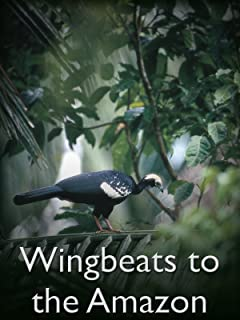 Wingbeats to the Amazon