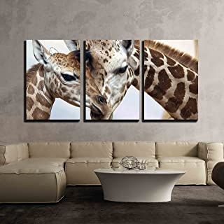 wall26 - 3 Piece Canvas Wall Art - Closeup of a Mother Caring for Young - Modern Home Decor Stretched and Framed Ready to Hang - 16