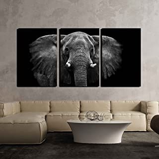 wall26 - Elephant on Black Background - Canvas Art Wall Decor - 16