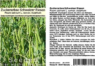 Seedeo Zuckererbse Schweizer Riesen Pisum sativum L. convar. Axiphium ca. 50 Samen BIO