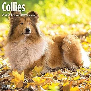 Bright Day Calendars 2021 Collies Wall Calendar by Bright Day, 12 x 12 Inch, Cute Dog Puppy