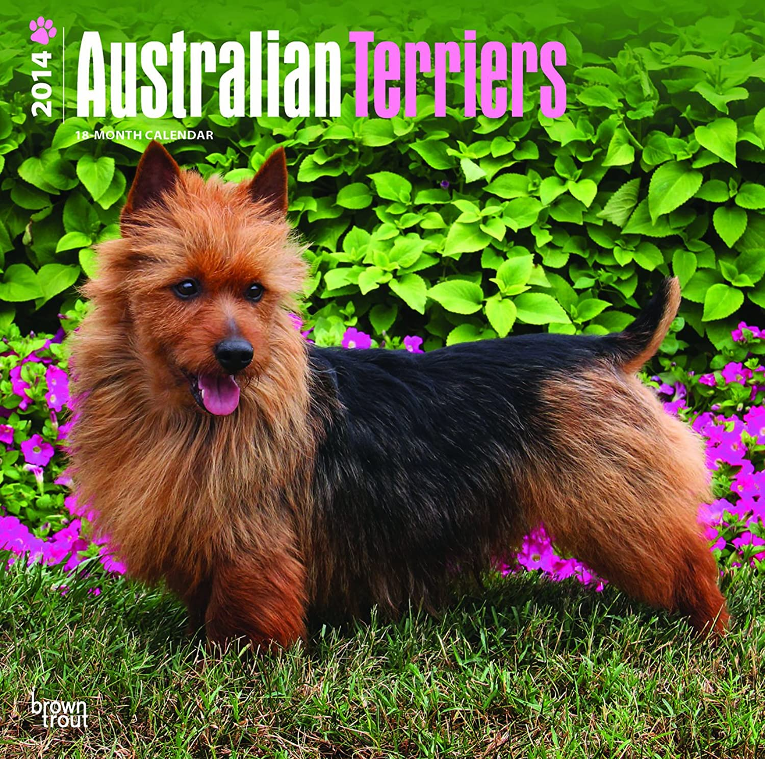Australian Terriers 2014 Wall Calendar by 2014 Calendars B00C3DMI2K | Online-Shop