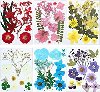 72 Pieces Real Dried Pressed Flowers Dried Flowers Leaves Set Mixed Multiple Dry Flower for DIY Candle Resin Jewelry Nail ...