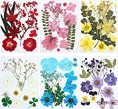 HYUAN Real Dried Pressed Flowers Assorted Real Dried Pressed Leaves Natural Dry Leaves for Pressed Leaf Art Craft DIY Embellishment Decorations 5 Choice A-15pcs