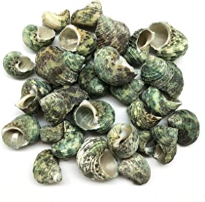 PEPPERLONELY Silver Mouth Green Turbo Hermit Crab Sea Shells, 8 OZ Apprx. 30~40PC Shells, 1 Inch ~ 2 Inch