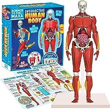 خارق الاده بودن! Toys Interactive Body Human Figure کاملاً قابل تشخیص آناتومی شکل - مدل بدن بلند 14 اینچ برای کودکان - کیت آناتومی - ماهیچه ها ، اندام ها و استخوان های متحرک اسباب بازی آناتومی کودکان STEM - سنین 8
