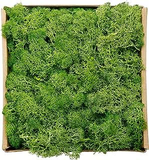 Best colored moss for terrarium Reviews