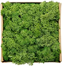 Best is floral moss real Reviews