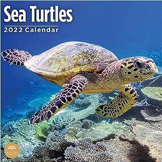 2022 Sea Turtles Wall Calendar by Bright Day, 12 x 12 Inch, Ocean Animals