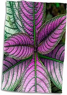 3D Rose Persian Shield Plant-Strobilanthes Dyerianus-Costa Rica Hand Towel, 15
