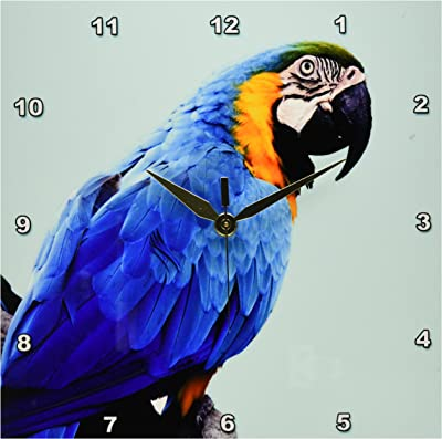 3dRose dpp/_16938/_1 Wall Clock 10 by 10-Inch 3D Rose Scarlet Macaw