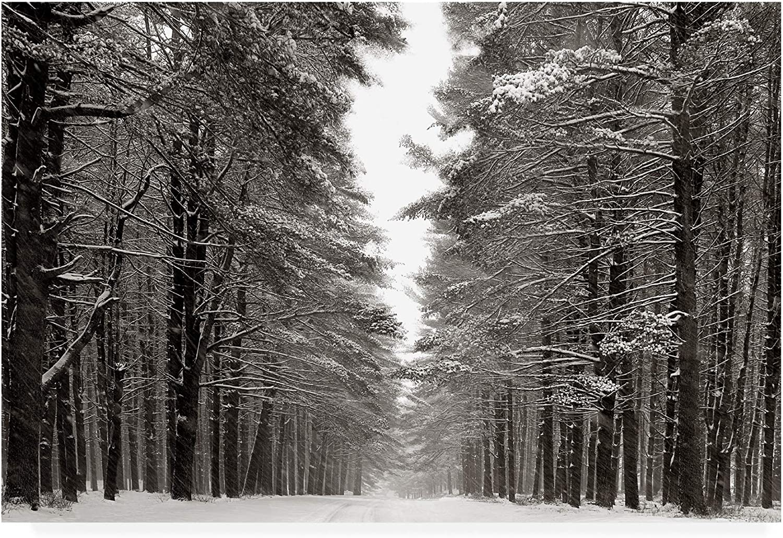 Trademark Fine Art A Snowy Walk IV by James Mcloughlin, 12x19