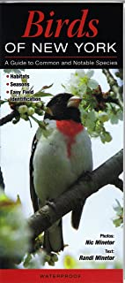 Birds of New York: A Guide to Common & Notable Species