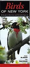 common birds of new york city