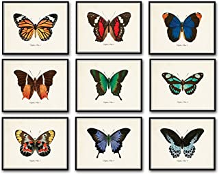 Best butterfly prints framed Reviews