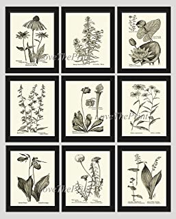 Botanical Print Set of 9 Prints Unframed Antique Coneflower Echinacea Foxglove Water Lily Lotus Bellflower Pitcher Plant Aster Lady's Slipper Moccasin Dandelion Lily of The Valley Wall Art MFS