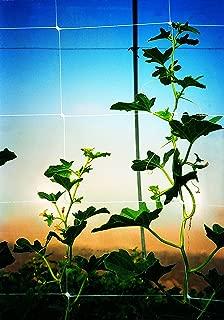 Tenax 100522968 084065 Hortonova Sm Plant Trellis Net, 4' X 100' White