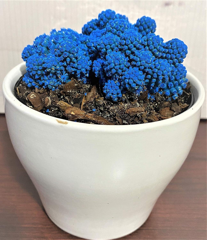Waterbourn Desert Gems Live Cacti New item Succulent Outstanding 1 Plant p Cactus 4
