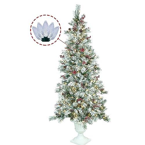 Plantable Christmas Tree.Potted Christmas Tree Amazon Com