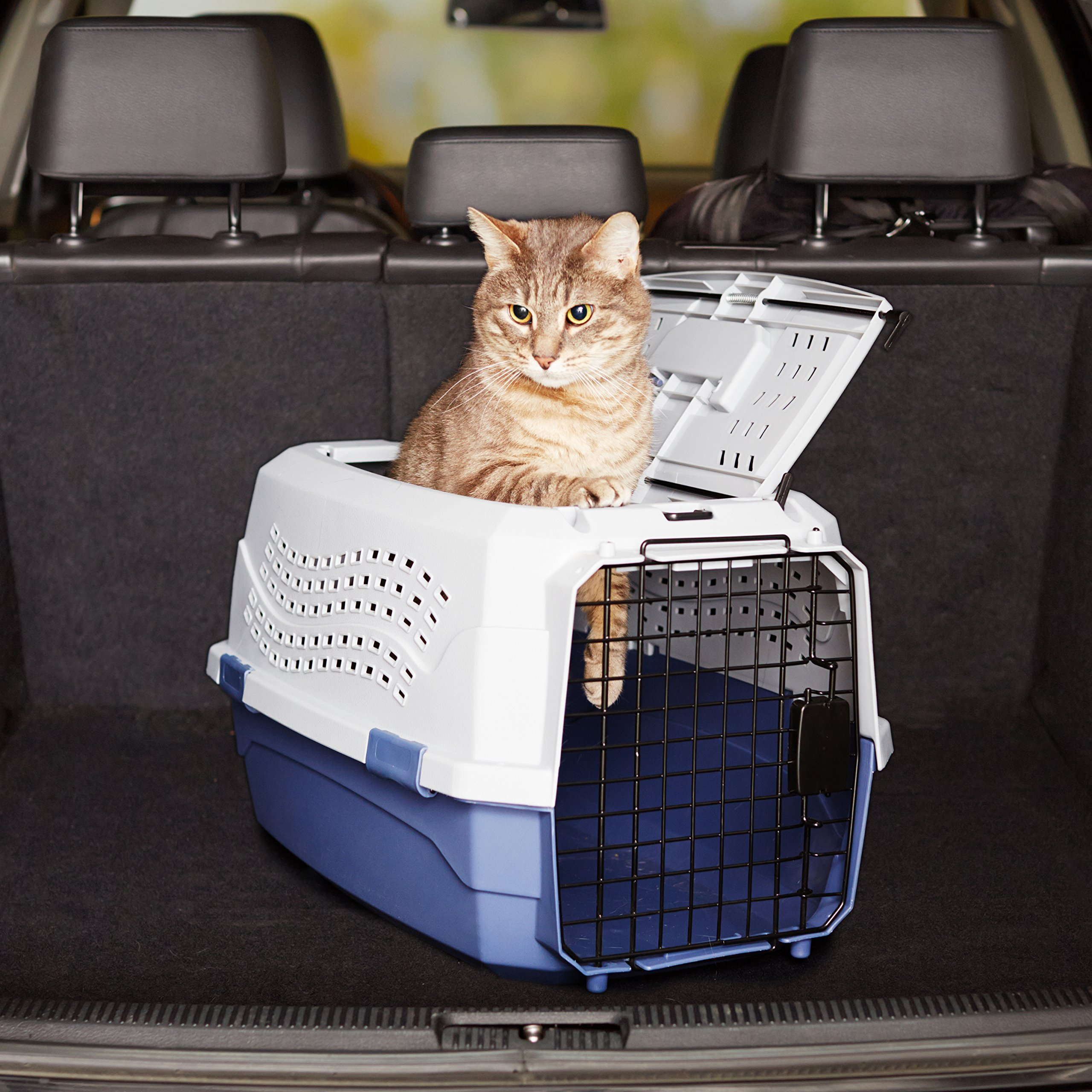 Amazon Basics Two-Door Top-Load Hard-Sided Pet Travel Carrier
