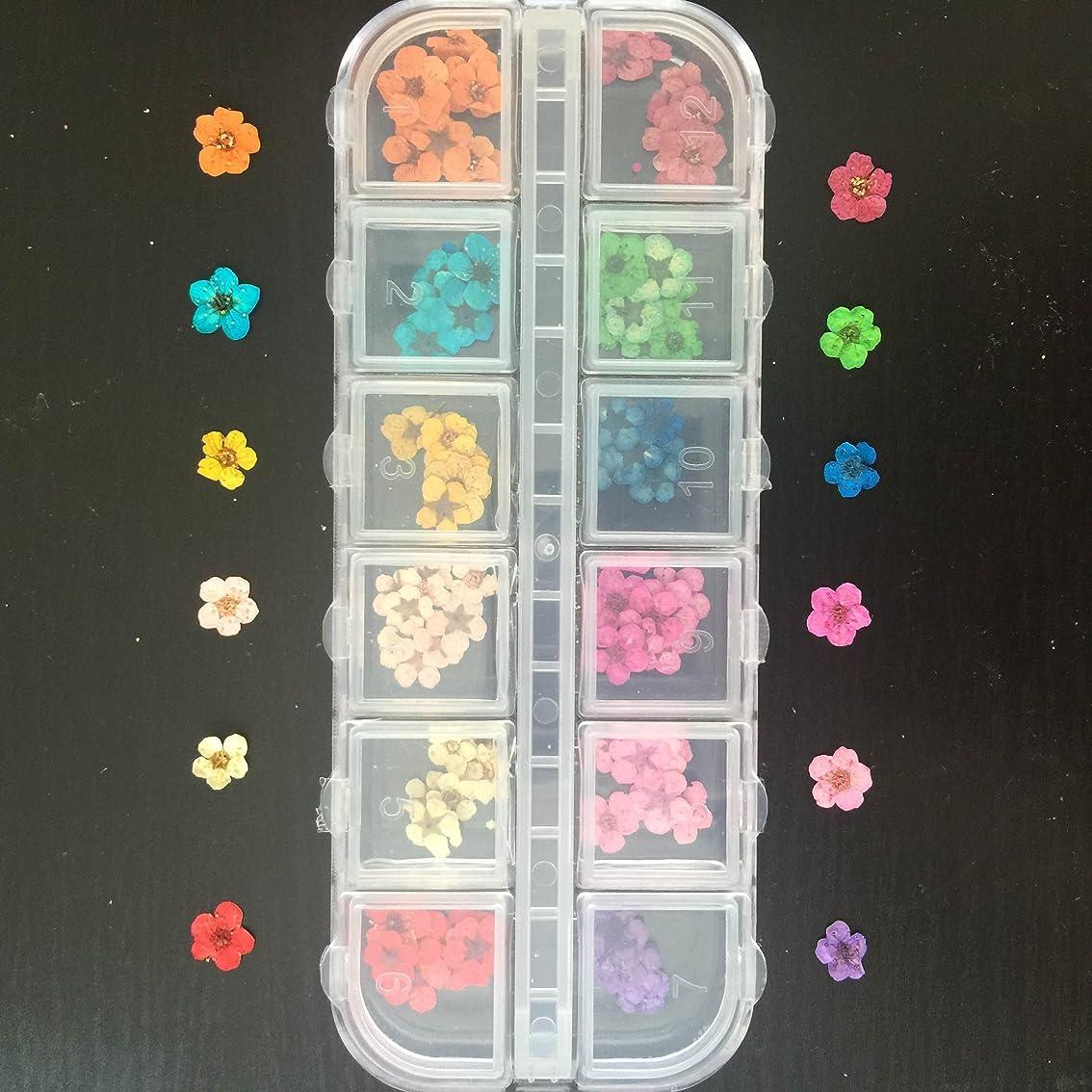 の量受け皿クリップドライフラワー上質押し花120枚ケース入 ネイル&レジンアート用12色×各10枚