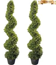 tall topiary plants