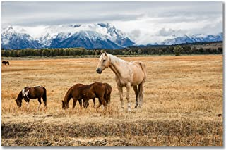 Western Wall Art Photography Print - Picture of Palomino Horse in Grand Teton National Park Wyoming - Unframed Equine Phot...