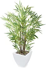 Closer To Nature 3ft 6-inch Mini Bonsai Bamboo Tree