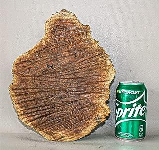 Red Mallee Burl Live Edge Exotic Wood Burl Cap RML1539