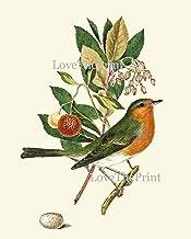 Robin Bird su ceppo che canta-Realistici Decorazione Giardino amici giardino interno Nuovo