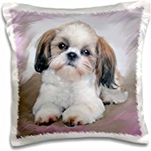 3dRose pc_4807_1 Shih Tzu Puppy-Pillow Case, 16 by 16