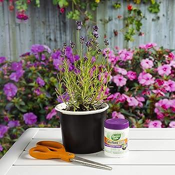 Garden Safe Rooting Hormone (93194), Case Pack of 1