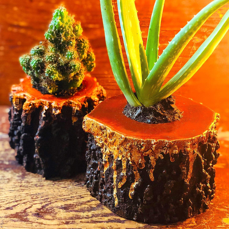 Live モデル着用&注目アイテム Potted Aloe Succulent 激安通販専門店 Set Cool Painte Mix Plant Unique in