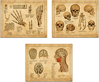 Vintage Anatomical Medical Prints - Antique Anatomy Illustrations - Gallery Wall Decor Art Print 8 x 10 Unframed (Set of 3)
