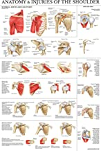 Laminated Anatomy and Injuries of The Shoulder Poster - Shoulder Joint Anatomical Chart