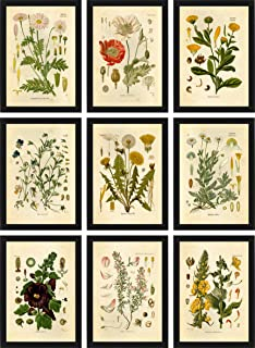 Ink Inc Botanical Prints Floral Wildflowers Wall Art Prints - Set of 9-5x7 - Matte - Unframed