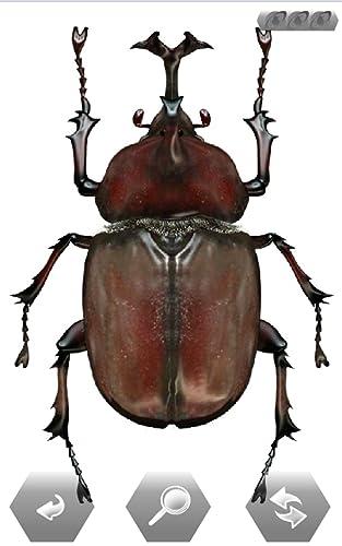 『世界の昆虫採集』の5枚目の画像