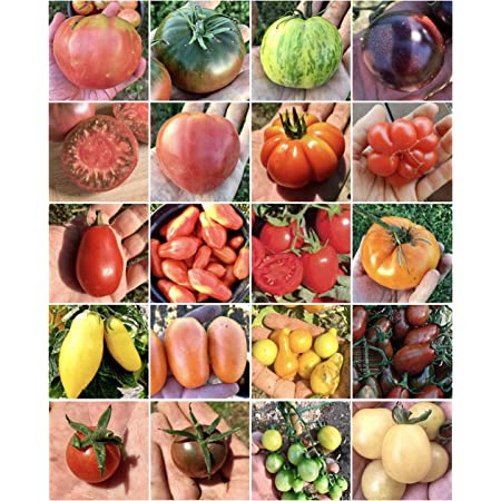 Alta Germinazione Non OGM Facile Da Piantare C-LARSS 20 Pezzi//Borsa Semi Di Pomodoro Viola Semi Di Ortaggi Per Fattoria Semi di pomodoro viola
