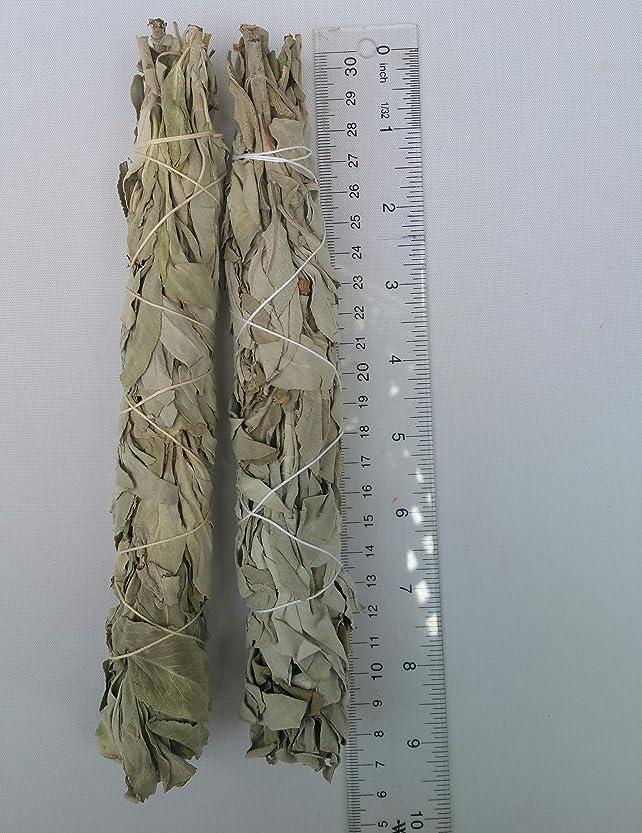 カビプレフィックス不注意The Better Scents カリフォルニアホワイトセージスマッジスティック 高品質サルビアアピアナ 約2× 長さ7インチ - 8インチ 幅1 1/4インチ スマッジスティック