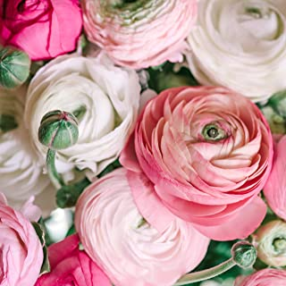 Ranunculus Tecolote Pastel Mix - Persian Buttercup Bulbs - 10 XL Bulbs - 8+ cm   Ships from Easy to Grow TM