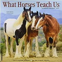 What Horses Teach Us 2019 Wall Calendar