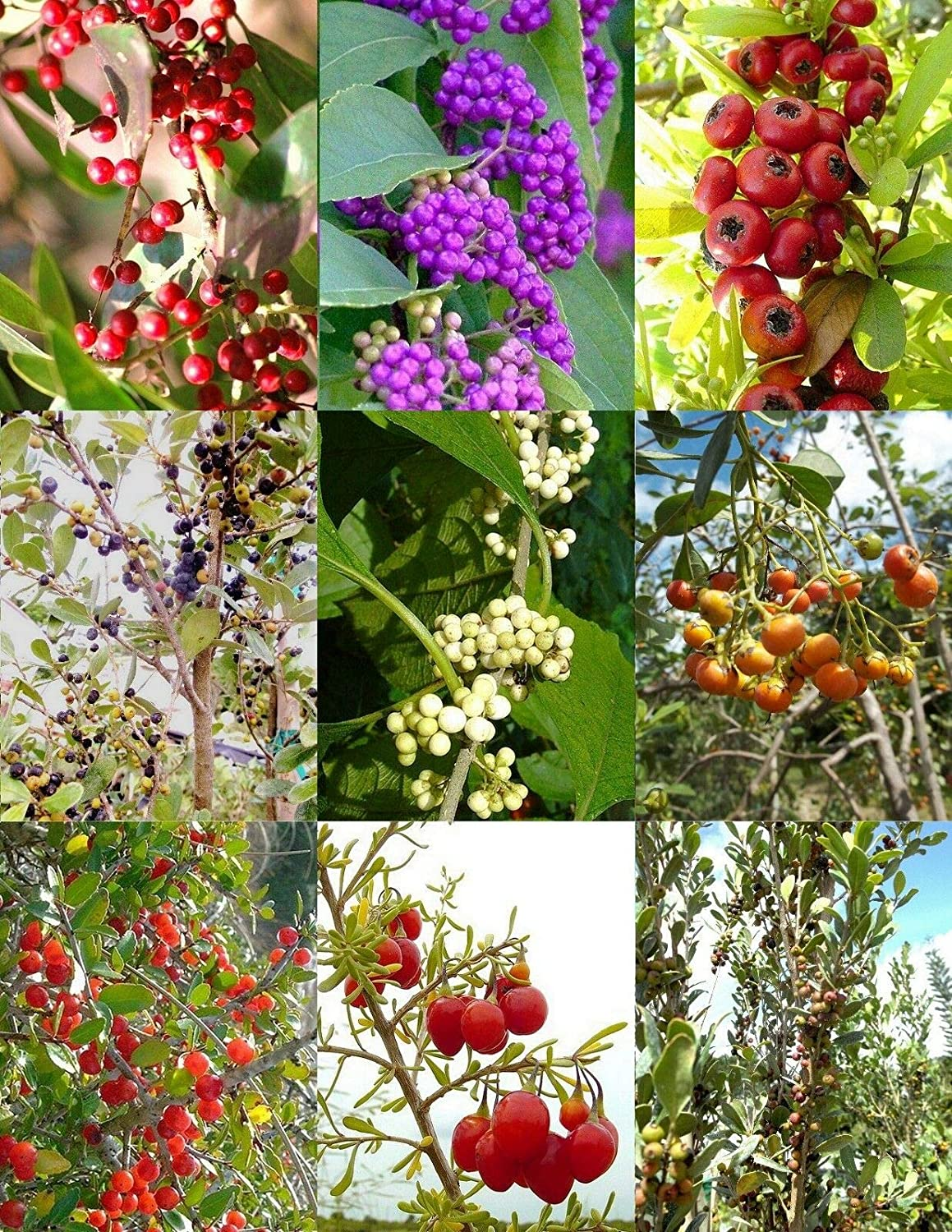 Florida Native Year-end annual account Ranking TOP15 Trees Variety Mix Plant Fragrant Wild Flower Rare