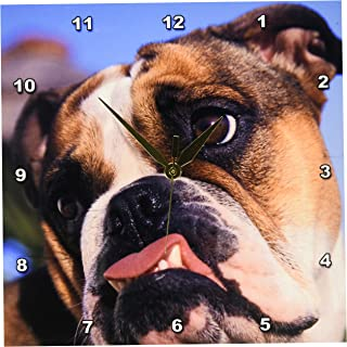 3dRose Danita Delimont - Dogs - English Bulldog - NA02 MWE0138 - Michele Westmorland - Wall Clocks (DPP_84121) 10x10 Wall ...