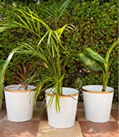 Ecofynd® 10 inches Round Metal Planter | Indoor Outdoor Balcony Patio Plant Pot | Home Garden Office Flowering Container...