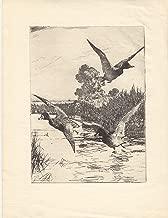 Startled Ducks; An Original Etching 1930