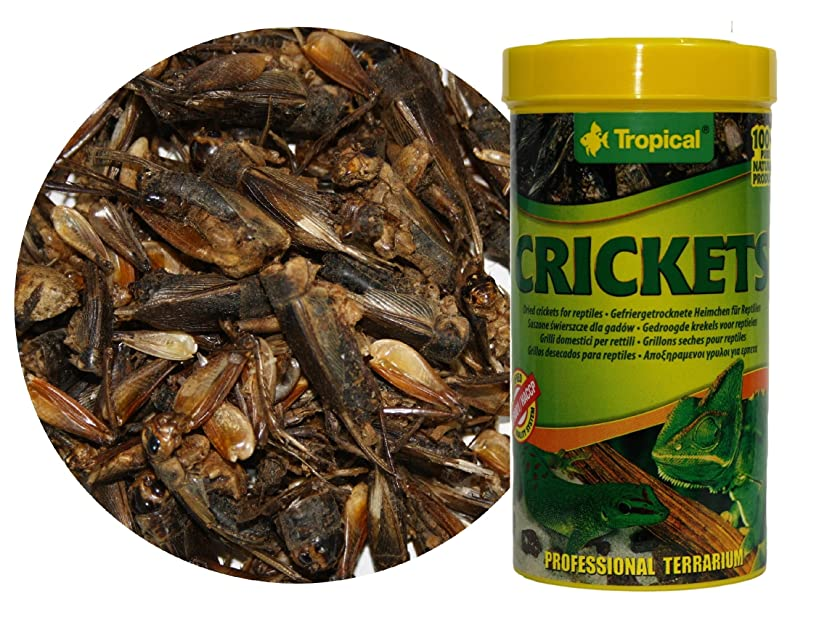 Dried Crickets - 100% Natural food for Reptiles, Land and Aquatic Turtles, and Large Aquarium Fishes - 250ml